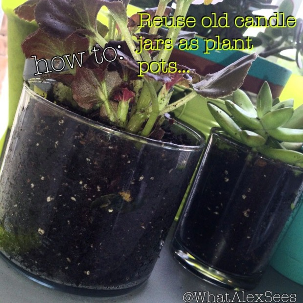 How to reuse candle jars as plant pots...